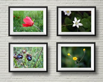 Wildflower prints, flower photography, nature photography, photography set, botanical prints, anemone, wild orchid, horizontal prints