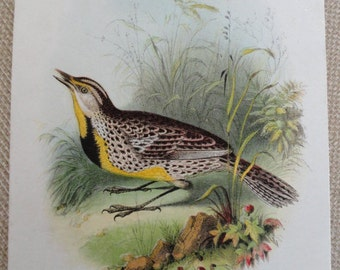 C330)  Antique Print TheMeadow Lark Card with poem by Barry Cornwall