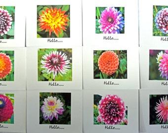Summer Dahlias Bursting with Color - Notecards