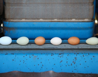 Fresh Eggs Print - Colorful Eggs, Old, Blue Tractor