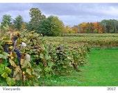 2017  Vineyards -  Wall Calendar - natural photography - beautiful NY state Vineyards - all seasons from Chautauqua County