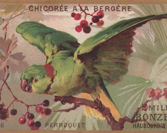 Green Parrot In A Jungle - Chicoree A La Bergere - Original Antique Victorian Trade Card
