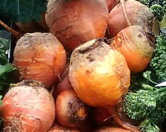 Golden Detroit Heirloom Beet Seeds Non GMO
