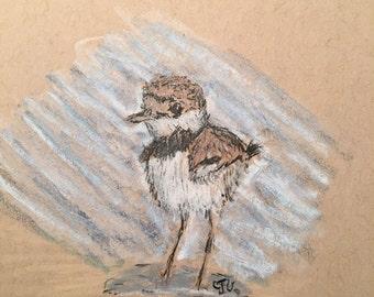 Kildeer chick sketch