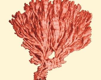 Sea coral art print vintage Nautical art print beach art Sea art print Ocean Decor Natural History art Home decor wall art ocean art print
