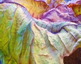 16x20 Macro Autumn Leaf Print, Macro Photography, Colorful, Leaf, Nature Photography, Fall, Home Decor, Purple, Orange, Yellow, Green, Leaf