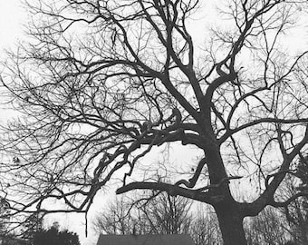 Black and White Tree Church Historic Old North Carolina Architecture Rustic Wall Art Photography Print