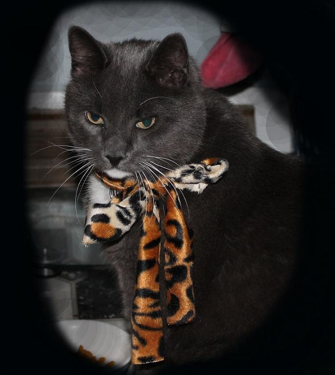 Seymour in Necktie