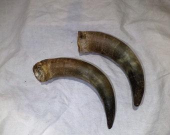 Steer horn etsy cattle horns steer horns taxidermy salvage repurpose as hooks or hangers or rack sciox Choice Image