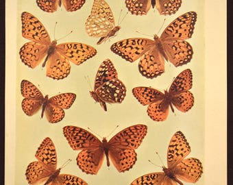 Print Butterflies Wall Art Butterfly Print Wall Decor Antique