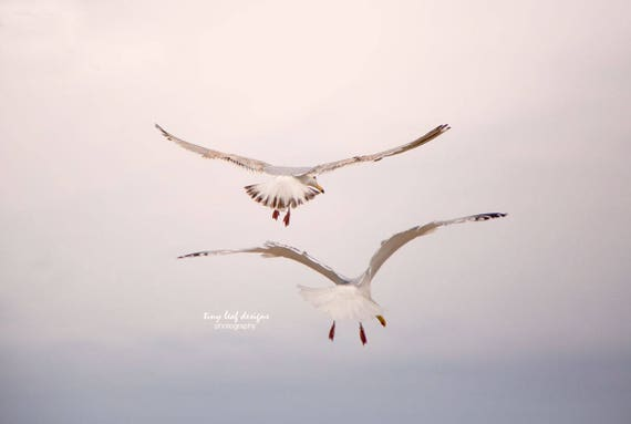 Seagulls in Flight Original Photography
