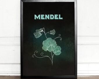 Mendel, Mendelian Inheritance, Pea Flower, Genetics, Science Poster, giclee art print, Wall Decor, Illustration