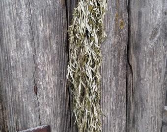 mugwort Artemisia vulgaris dried herb bouquet natural wild mug wort common herbal medicine witchcraft heeling herb good sleep aromatherapy