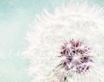 Dandelion photography, dandelion photo, teal decor, spring decor, nature photography, home decor, blue, white, botanical, flower photography