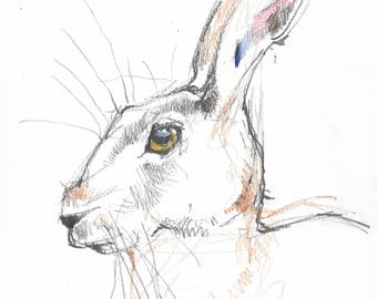 Hare #02 - Original A4 pencil and coloured pencil Drawing - suitable gift, wildlife, Hares, rabbit, bunny, rabbits, bunnies - cute