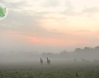 Horses in the Mist, A4 photography print, Gloucestershire sunrise
