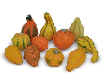 Fairy Garden  - Mini Gourds Set of 11 - Miniature