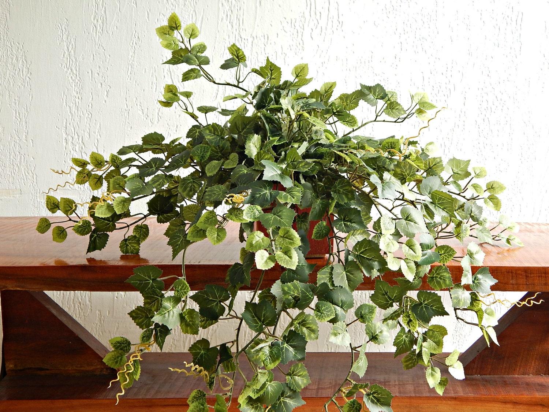 Little Ivy Plant Small Silk Plant Little By Eccentrichermit
