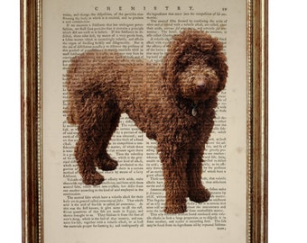 Labradoodle Dog, beautiful Art Print on Upcycled Dictionary Book page 8'' x 10'' inches