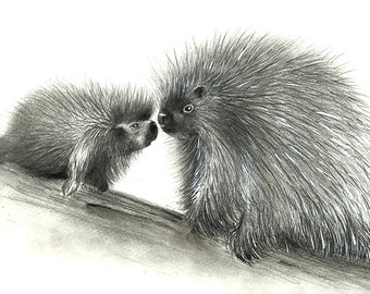 porcupines a 85 x 11 print of an original charcoal drawing