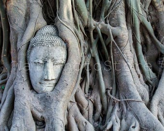 Buddha Photography, Thailand Photography, Buddha Head Statue in Tree Roots, Buddha Prints, Temple, Travel Photography, Fine Art Photography