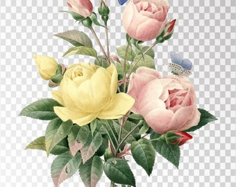 "Rose Bengale Clip Art Flower - 16""x20"" Transparent Background Clipart PNG and JPG Illustration Instant Download"