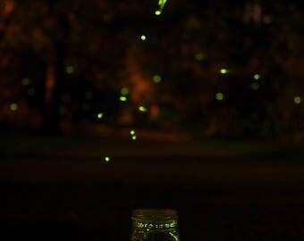 Fireflies No. 2