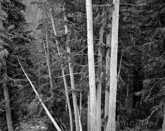Forested / landscape black and white photograph, fine art, wall art print, landscape photo, b&w photography, nature wall decor