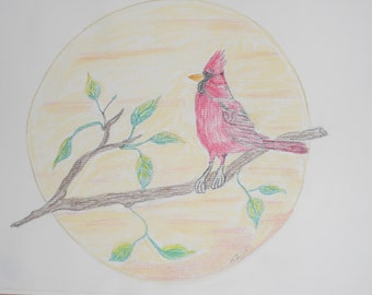 Nature pastel drawing of cardinal bird