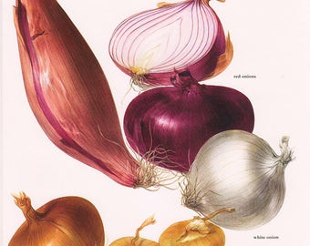Set of 2 Vintage Vegetable Prints Onions Garlic 1970s Illustrated Color Plates Book Pages