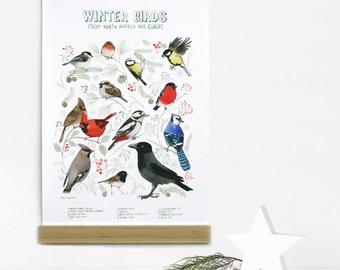 Bird Print, Bird wall art, Bird Watercolor, Robin, Blue Jay, Cardinal, Crow, Great Tit, Waxwing, Sparrow, Vintage Art Print, Bird Art Print