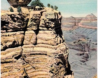 Vintage Arizona Postcard - Duck on a Rock at the Grand Canyon (Unused)