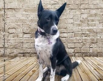 Dog Tag ID Your Choice of Colors - Handmade Bone Pet Tag - Stars Kawaii Dog ID - Silent and Waterproof - Colorful Dog Collar Accessory