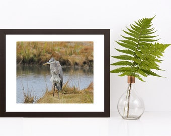 Angry Bird - Bad Day - Cute Funny Animal Print - Bird Photography - Grumpy Blue Heron - Nature Photography, Funny Bathroom Print, Wildlife