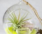 Suspendu Kit Terrarium || L'air plante + Quartz Rose, Quartz clair + jaune sable || Petit || Petit