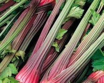 VCE)~GIANT RED Celery~Seed!~~~~~~~~Who Knew?!!