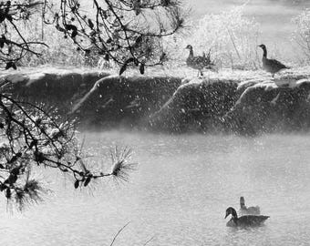 Black and White Photography, Nature Photography, Landscape, Geese, Snow, Fog, Winter, Birds, Nature, Wall Art, Print, Water