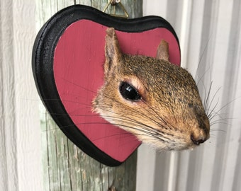 Squirrel Head Mount 005- Taxidermy Female on Pink/Black Heart Plaque