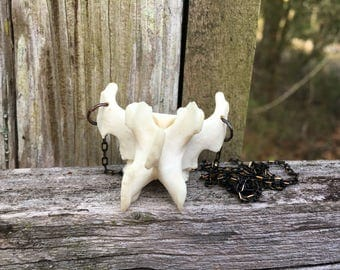 Otter Vertebrae Necklace 001