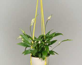 Modern Macrame Plant Hanger / Hanging Planter / Plant Holder / plant / planter / indoor planter / hanging plant / office decor /  Yellow