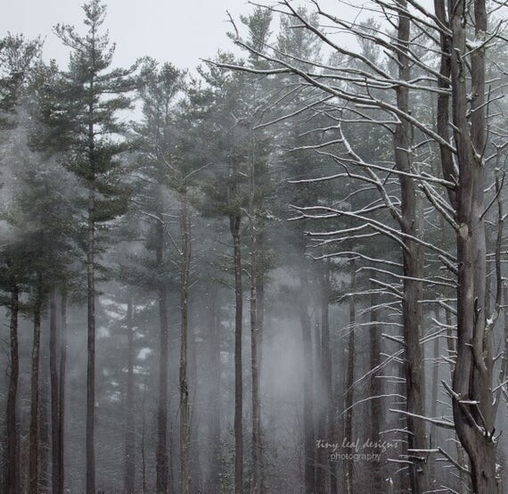 Woods in the Fog 8x8 10x10 12x12 16x16