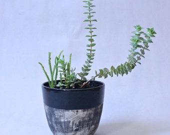 Fade Planter Made to Order