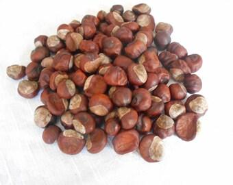 Real Horse Chestnuts Buckeyes Natural  Craft Supply