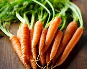 Tendersweet Carrot - 300 seeds (Organic/non-GMO)