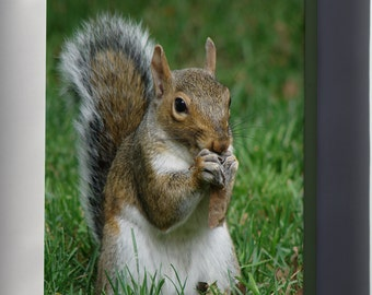 Canvas 16x24; Gray Squirrel (Sciurus Carolinensis) With Maple Tree Seed