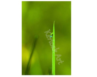 Single Blade of Grass, Dewdrop,  Giclee Print, Plant Photo, gree picture, macro photo, Home Decor, Reflection in Dewdrop, water drop,