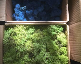 1 pound box of Reindeer Moss
