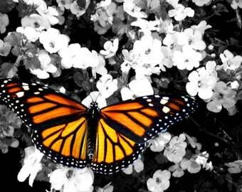 Monarch Butterfly 8x10 DIGITAL DOWNLOAD Print Wall Art