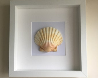 Framed Beach Shell