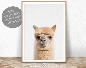 Alpaca Print, Minimalist Nursery Decor, Printable Alpaca Wall Art, Modern Colour Animal, Large Poster, Digital Download, Babies Room Decor